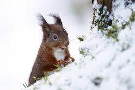 Winter squirril.jpg