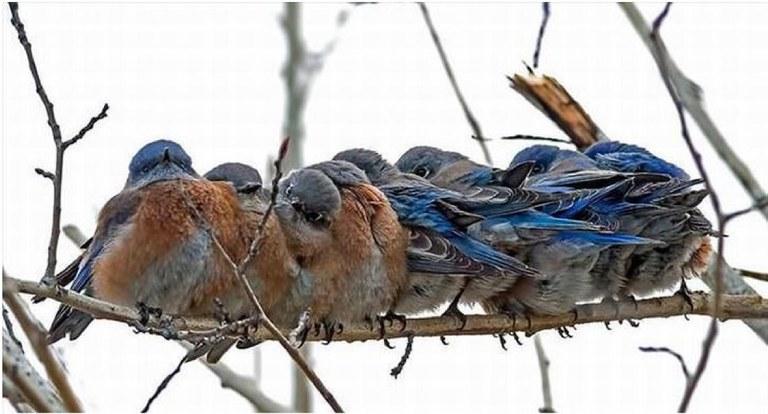 Wildbirds.jpg